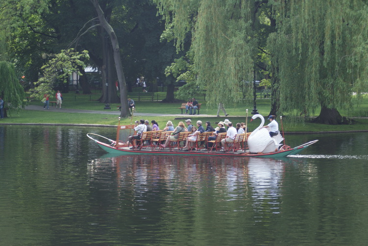 Swan Boats in Boston Commons