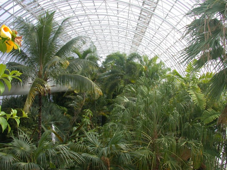 The inside of the Crystal Bridge